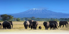 TANZANIA Tour-Package